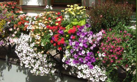 Cómo tener un balcón florido