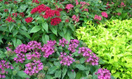 Formas fáciles de propagar las plantas