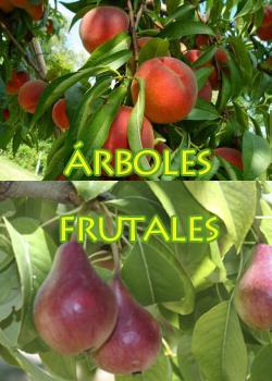 arboles-frutales-titulos laterales