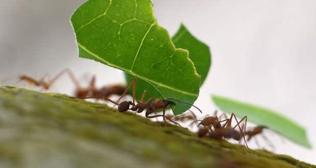 combatir-las-hormigas-620x330