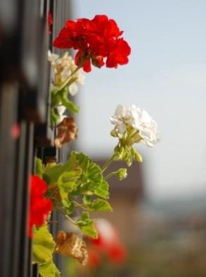 como-tener-un-balcon-florido