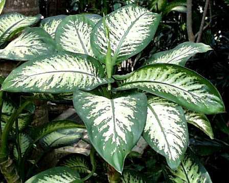 en general las plantas de interior y como su nombre indica son aquellas que pueden cultivarse en el interior de las viviendas con unas grandes