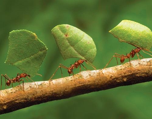 eliminar-hormigas