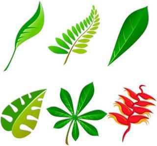 hojas-plantas