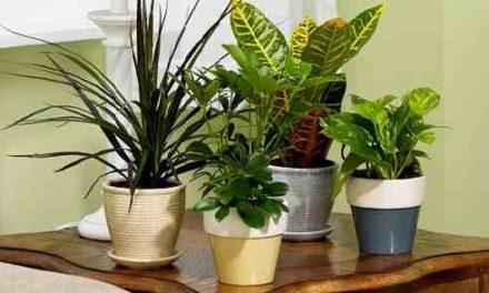 Trucos para limpiar plantas de interior