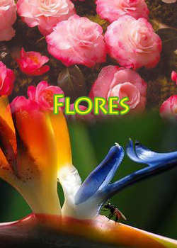 titulo-lateral-flores