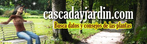 CASCADA Y JARDIN